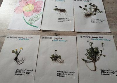 Naravoslovni dan – herbarij/Természettudományi nap – herbárium